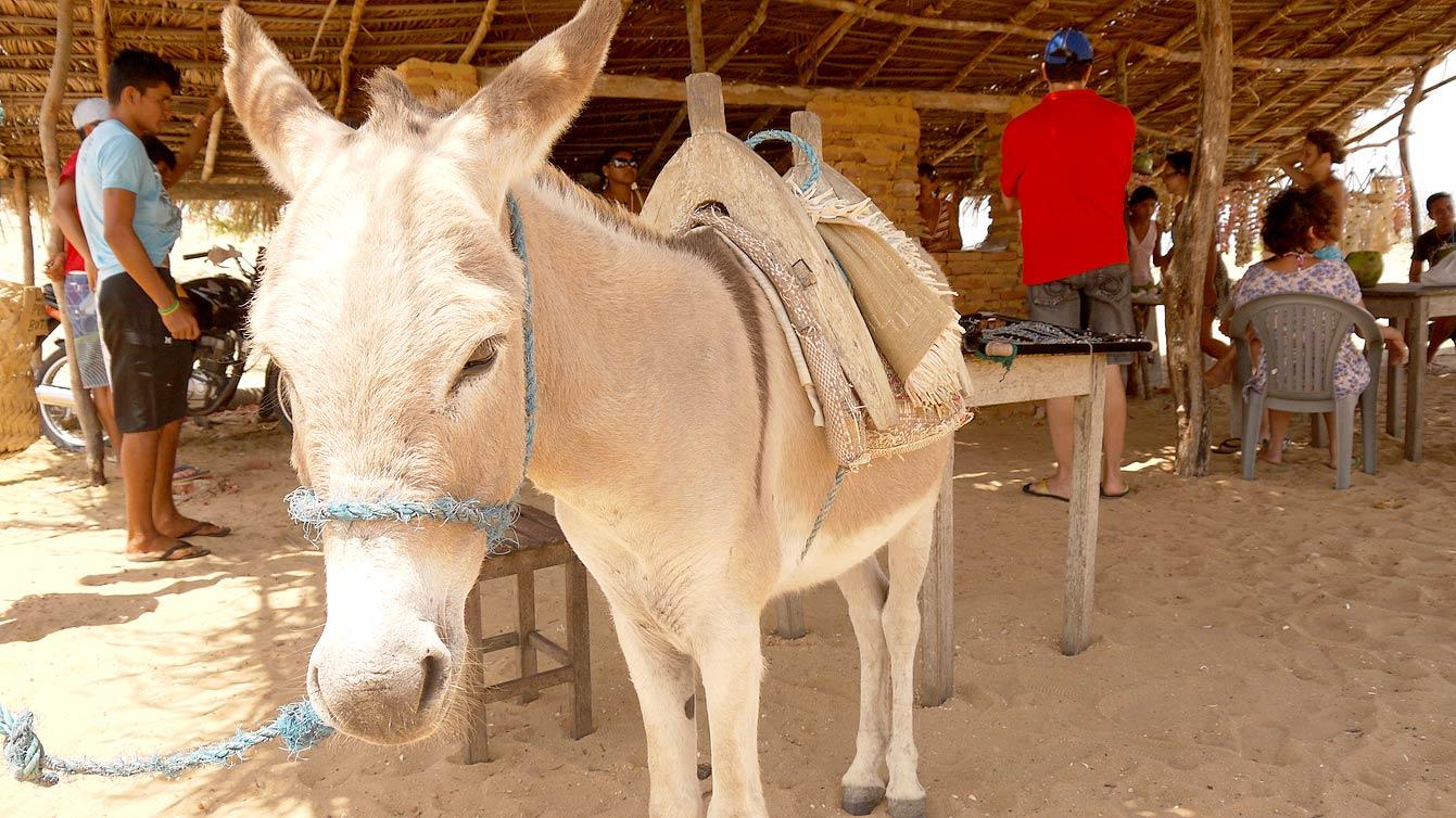 jericoacoara-buggy17