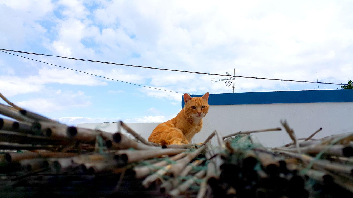 chat piscine naturali à Forna, île de Ponza
