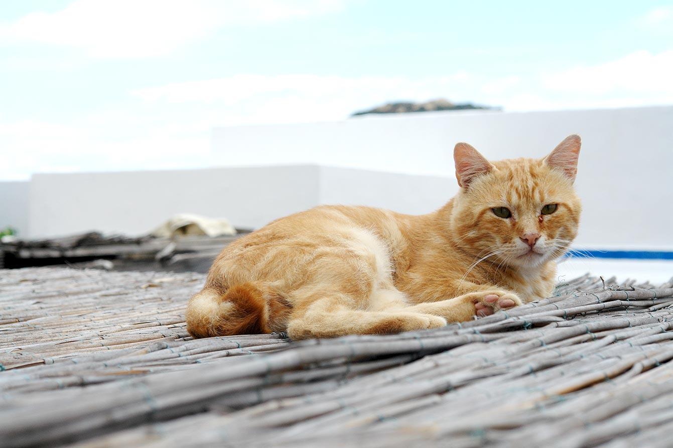 chat, piscine naturali à Forna, île de Ponza