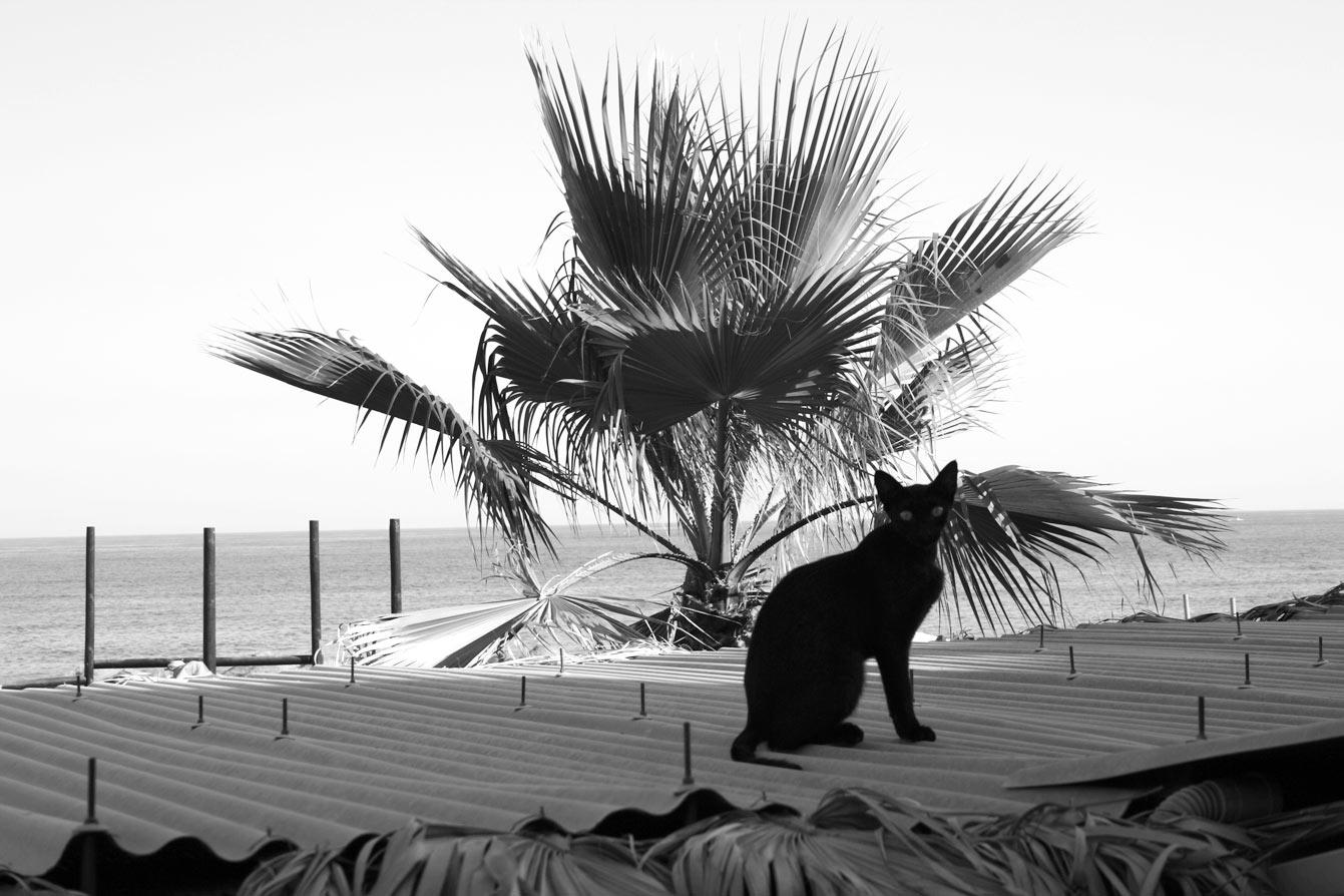 Playa-Carvajal-Benalmadena-malaga-33