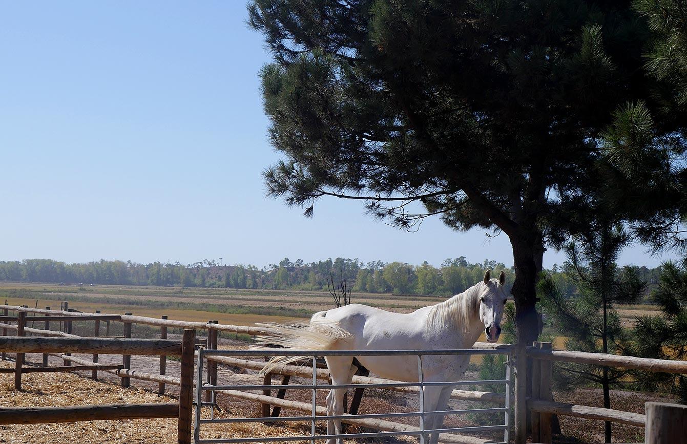 Cavalos na Areia, Comporta