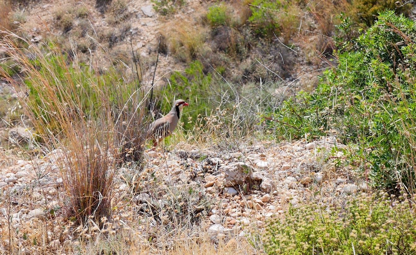 Oiseau sauvage, Spetses