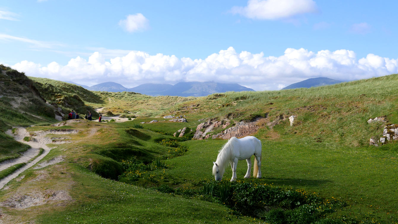 Luskentyre beach (Île de Harris), chevaux blancs
